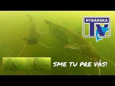 Rybárska Televízia 5-2017  - relácia pre rybárov o rybách a rybolove