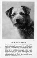 1931 The BORDER TERRIER DOG With Breed desc. Vintage PHOTO Art Print