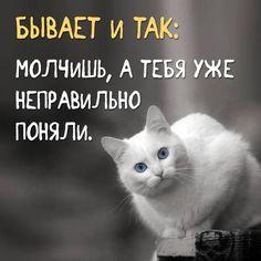 Молчишь, а тебя уже неправильно поняли.. Funny Phrases, Good Mood, In My Feelings, Verse, Funny Jokes, Wisdom, Quotations, Lettering, Sayings