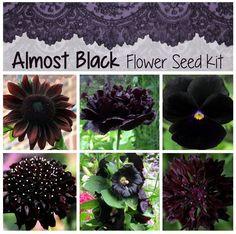 Gothic Flowers, Dark Flowers, Beautiful Flowers, Moon Garden, Dream Garden, Gothic Garden, Witchy Garden, Black Garden, Enchanted Garden