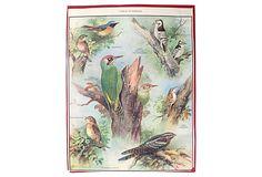 1930s Ornithology Poster