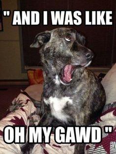 #Dog was like: OMG