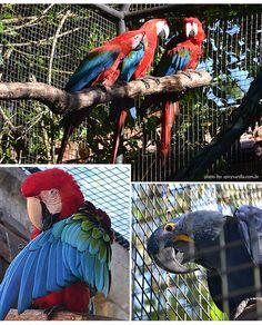 Foz do Iguaçu | parque das aves