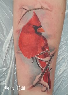 Realistic color tattoo of a Red Cardinal done by Bruce Riehl