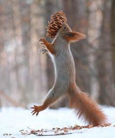 Squirrel Jump by Vadim Trunov