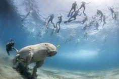 IlPost - Quando un esemplare di dugongo va alla ricerca di cibo nella baia di Marsa Alam, sulla costa occidentale del Mar Rosso in Egitto, capita spesso che decine di appassionati di snorkeling si immergano per osservarlo. Il numero di turisti che si immerge per osservare i dugongo è in costante aumento, ma il problema più serio ... - Quando un esemplare di dugongo va alla ricerca di cibo nella baia di Marsa Alam, sulla costa occidentale del Mar Rosso in Egitto, capita spesso che decine di…