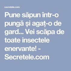 Salvia, How To Get Rid, Beautiful Gardens, Good To Know, Agate, Pune, Gardening, Claudia Cardinale, Education