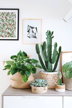 Room decoration using cactus is never ending. Starting from the real cactus, cactus displays, to the cactus made of stone. Methods, planting media, and pots used to plant cactus and important infor… Cacti And Succulents, Cactus Plants, Small Cactus, Cactus Flower, Cactus Art, Cactus Decor, Deco Jungle, Deco Nature, Decoration Plante