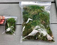 Pre-order: The Vertex ZERO L Pre-designed Completed | Etsy Large Terrarium, Moss Terrarium, Terrarium Plants, Moss Plant, Fern Plant, Terrarium Supplies, Bonsai Garden, Moss Garden, Garden Seeds
