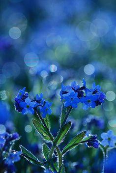 ~My Blue & Green World~