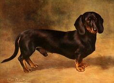 The New Book of the Dog 1911 - Lilian Cheviot (1884-1932), Dachsund. #vintage, #animals, #canis lupus familiaris