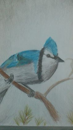 Just my drawing I did a while back. A little blue Jay done with spectrum noir artist pencils.