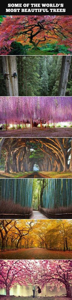 Some of the world's most beautiful trees.