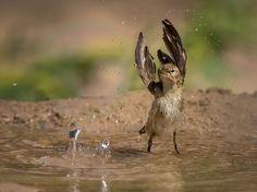 Fotografia di Mohd Khorshid, National Geographic Your Shot
