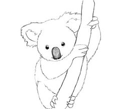 What you'll need: HB ( Pencil, pencil Eraser Drawing paper Drawing surface Today's tutorial will be how to draw a koala. No… not a koala bear— there's no such thing. Animal Line Drawings, Simple Line Drawings, Outline Drawings, Animal Sketches, Cartoon Drawings, Cute Drawings, Easy Drawings Of Animals, Bear Face Drawing, Kangaroo Drawing