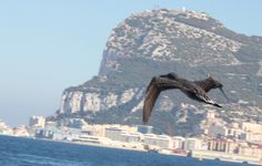 The Rock of Gibraltar. British since 1704.