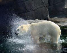 Columbus Zoo - Columbus, Ohio