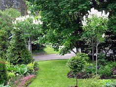 Konnadonna - kotona ja puutarhassa: Tammelan kaunottaret