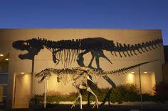 Esqueleto de Tyrannosaurus rex al frente del Museo de las Rocosas en el estado de Montana, Estados Unidos.