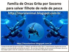 Mural Animal: Família de Orcas Grita por Socorro para salvar fil...