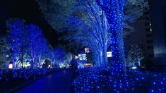 Led Solar String Fairy Lights Outdoor Garden Xmas Party Blue 200 Leds Light for sale online Christmas Lights Wallpaper, Blue Christmas Lights, Merry Christmas, Christmas Images, Christmas Time, Holiday Lights, Christmas Wedding, Christmas Decor, Xmas Holidays