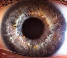 目いっぱいアップで撮った人間の瞳。Suren Manvelyanの写真12枚
