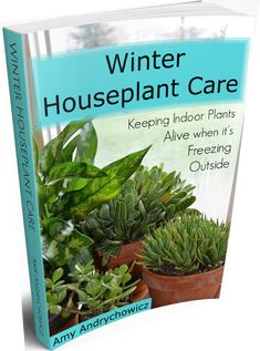 Keeping houseplants alive is hard, especially during the long dark winter months. Houseplants don't grow the same during the winter as they do in the summer, and they shouldn't be treated the same either.  Keeping your houseplants thriving through the winter doesn't have to be a constant disappointment or a huge chore. #houseplants #plantcare #plants #getbusygardening
