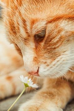 Cats advise for us humans: Stop and smell the flowers!