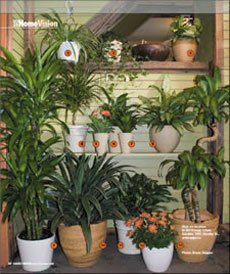 NASA recommends having 15 to 18 good-sized houseplants in an 1,800-square-foot home. According to a NASA study, certain plants can be chosen to best purify your home's air. (flowering house plants offices)