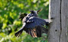 og jammen meg klemmer ikke fuglene hverandre også ;)
