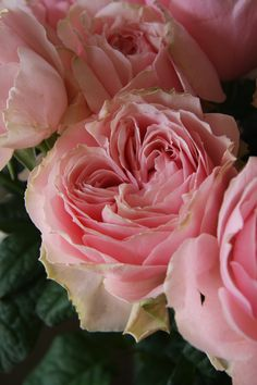 rose Elegant dress