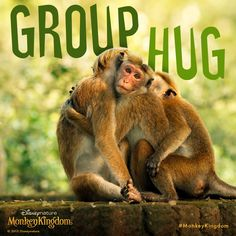 Sometimes all you need is a warm embrace… or a couple. #MonkeyKingdom
