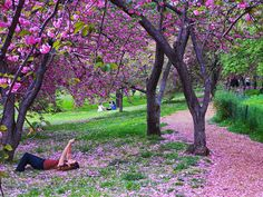 Magical ny moments- cherry blossoms in central park Relaxing Places, Spring Blossom, Central Park, New York City, Nyc, In This Moment, Seasons, Plants, Photography