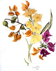 Bougainvillea and Frangipani, St. John watercolor painting by Deborah Sowray