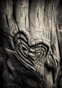 As a tree grows older its scars grow larger.   I know my scars will be made beautiful by God. Help me to accept these scars and forgive me when my actions wound others.
