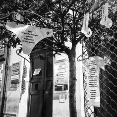 L'alberello dei panni poetici di Forlì.