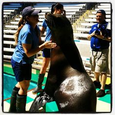 Elrod the sea lion paints for the SeaWorld-Busch Gardens Conservation Fund. Via @JuliaTownsend