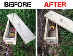 how to make a squirrel trap