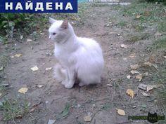 Найдена кошка г.Подольск http://poiskzoo.ru/board/read31148.html  POISKZOO.RU/31148 Кто потерял ласковую, нежную и потрясающе белую кошечку? Сейчас она во дворе .. дома на Свердлова и, похоже, ждет котят. Ей очень одиноко и холодно, потому что в подвал ее не пускают местные кошаки, а коробку, которую для нее сделали жильцы, занял дворовый кот. Кошечка очень нежная и пугливая: боится даже голубей. На улице холодает, кошечка не выживет зимой( Как можно скорее ищем старых или новых хозяев…