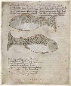 Pisces   Cicero's Aratus   England [Winchester?]; second quarter of 11th cent   Cotton Tiberius B. V part 1 f.33v