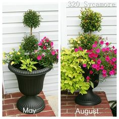 Summer 2012 Flower Pots ----May planting and how they have grown August, 2012.    320 Sycamore Blog