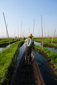 Floating gardens on Inle Lake, Myanmar. Learn more at: http://borgenproject.org/how-to-make-a-floating-garden/
