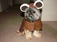 Ewok+pet+costume+special+order+by+SewingArt+on+Etsy,+$45.00