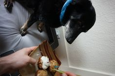Bear celebrates his 13th birthday with Peanut Butter Apple Pupcakes - see blog post for full recipe