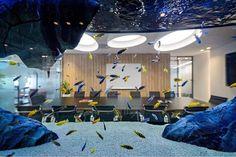Malawi setup in a room divided aquarium Malawi Cichlids, African Cichlids, Living Room Decor, Living Spaces, Living Rooms, Architects Melbourne, Aqua Decor, Australian Architecture, Marine Aquarium