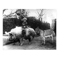 Vintage Funny Boy Pig Rider Donkey photo Postcard