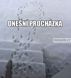 winter walk with a dog Funny Images, Funny Photos, Jokes Quotes, Memes, English Jokes, Make You Smile, True Stories, Haha, Words