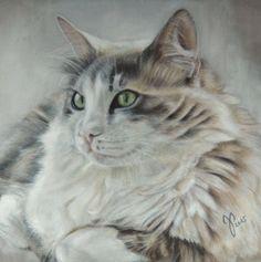 """Katzenportrait """"Starsky"""" ~ Zeichnung Katze ~ Pastell  ~ cat portrait ~ cat painting - pastel ~ Jutta Pallasch"""
