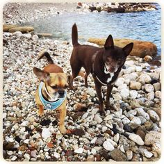 Billy & Gir at the beach in Sicily ...