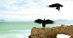 """oblivion-books: """""""" """"What we think to be our greatest weakness can sometimes be our biggest strength."""" ㅤ ㅤ ㅤㅤㅤㅤㅤ ㅤㅤ ㅤ ㅤ ㅤ ㅤ ㅤ― Sarah J. Maas , A Court of Wings and Ruin """" """" Story Inspiration, Writing Inspiration, Character Inspiration, Character Design, Gifs, Angel Stories, Ange Demon, Angels And Demons, Animation"""